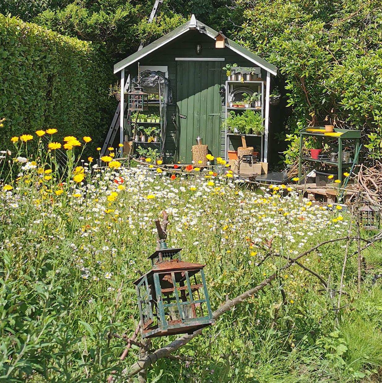 Bee Bomb Garden